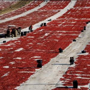 DRYING TOMATOES SARUHANLI TURKEY - 0